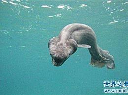 真正的十大深海野兽 乌贼王是远洋船只的克星