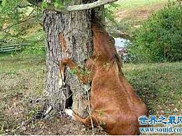 世界上可怕的植物食人柳树 柳树的枝条可以扼死猎物