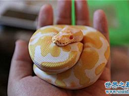 世界十大常见无毒蛇类 其中一半以上分布在中国