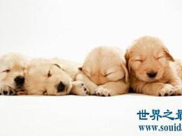 普通狗的寿命 如何计算狗的寿命