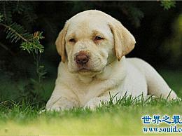 世界上最可爱的狗名单 世界上最可爱的狗名单