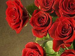 母亲节送花 母亲节送几束花 寓意大全送不同数量的花