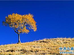 算上世界十大神奇的树 最神奇的树实际上能产生黄金