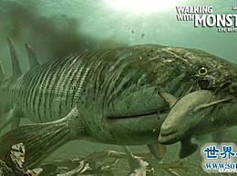 史前时代十大最可怕的动物 史前巨鱼立即将鲨鱼撕成两半