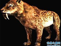 不同的剑齿虎已经灭绝 曾经是两只猫的组合
