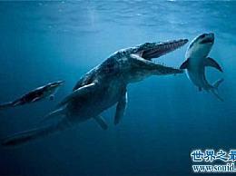伊希斯龙王鲸是一种古老的生物 曾经是海洋中的霸主