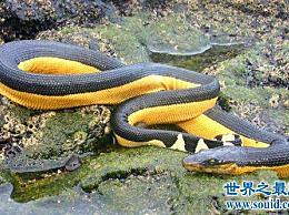 世界十大毒蛇中的哪种慢性毒液让你不知道