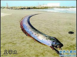 世界上最大的章鱼凶猛凶猛 看起来像一条传说中的龙