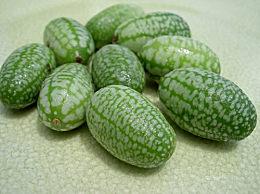 世界上最小的西瓜只有拇指那么大