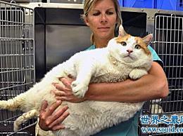 世界上最胖的猫 和一个7岁的孩子一样重