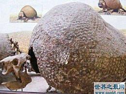 史前装甲战士雕刻兽 现代犰狳的祖先