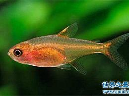 十大不朽热带鱼 养鱼的愿望可以实现