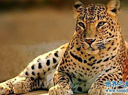 世界上跑得最快的动物排名第一 甚至比人类还跑得快