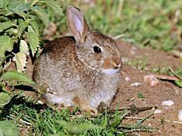 寿命最短的十种动物寿命最短 只有一天