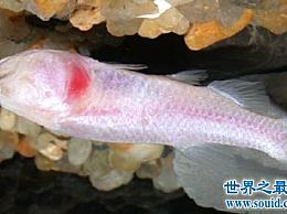 热带鱼有这么多种 哪一种最适合养鱼新手?