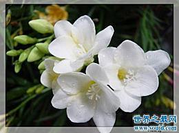 我心中最美的花 这些花是什么意思