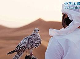 世界上最昂贵的宠物 迪拜的土豪都养鹰