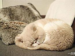 动物在冬天冬眠的十种最佳方式是什么