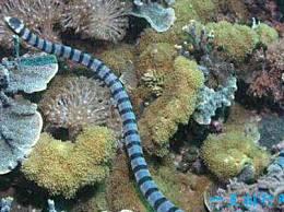 世界上最毒的蛇被列为最毒的蛇?