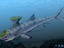 """巨齿鲨 十大史前海洋霸主 被称为""""地球历史上最强壮的生物"""""""