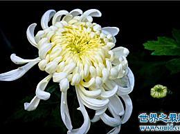 各种花的花语含义介绍了解花语并再次送花是有礼貌的