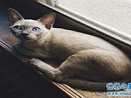 算上历史上最可爱的猫 排名第一的猫是不会得到它的!