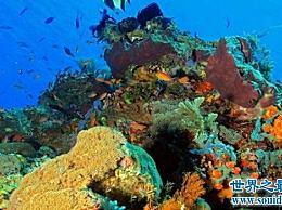 珊瑚海 世界上最大的海 风景优美 绝对是个好地方!