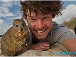 世界上最快乐的动物 短尾袋鼠 有着治愈的微笑