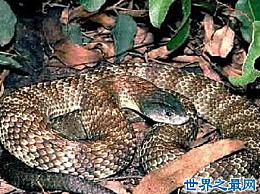 超级隐形能力变色龙蛇太毒了 不能触摸而死 小心避免