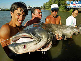 数世界上最大的鱼 那些大鱼征服者的传说