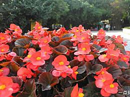 十大最耐寒花卉:冬季最耐寒花卉