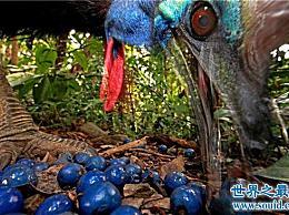 世界十大美丽而危险的动物 第一个蛋是蓝色的!
