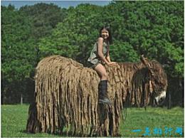 世界上最长的驴 普瓦图驴像拖着长发的拖把一样拖地