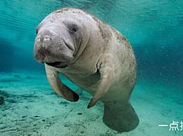 算上世界十大最丑陋的海洋生物 奇怪的知识增加了