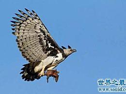 侧面最帅、身体最大的鹰――角雕