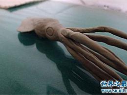 世界上最大的鱿鱼王 酸鱿鱼(长11米 重300公斤) 它有多强大