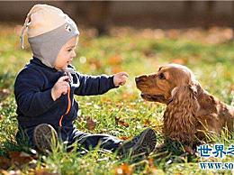 养宠物的好处不仅给你带来快乐和友谊