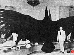 世界上最大的鹰――阿根廷巨鸟的目录(翼展7米 重量70公斤)