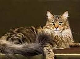前十名中最可爱的孟加拉猫是最可爱的