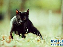 猫的智商排名 展示出售可爱的主人的智商