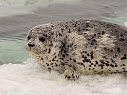 中国八大野生动物自然景区 都江堰排第一