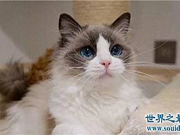 超级可爱的猫品种 什么时候组织一个小组去偷猫