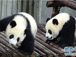 什么是稀有动物?你知道这些将要灭绝的动物吗