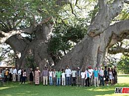 世界上最厚的树有多厚 骑在一棵栗树上(直径18米/树周长55米)