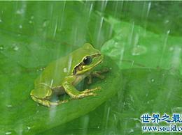 哪些动物适合冬眠的温度和环境