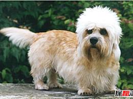 世界上最稀有的狗品种:葡萄牙水犬会捕鱼 第一只已经灭绝了!