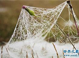 世界上最大的蜘蛛网 你见过700米长的蜘蛛网吗