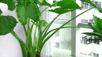 十大不能驯化的植物 看看你家里有没有!
