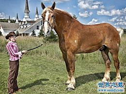 10个世界中关于马的最高纪录 历史上最完整的纪录