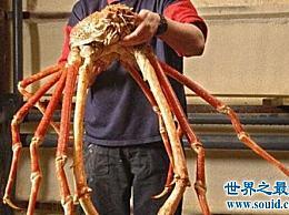 世界上最大的螃蟹 重80公斤!